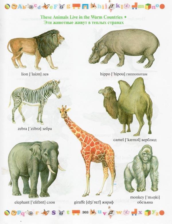 Тема 1: дикие животные