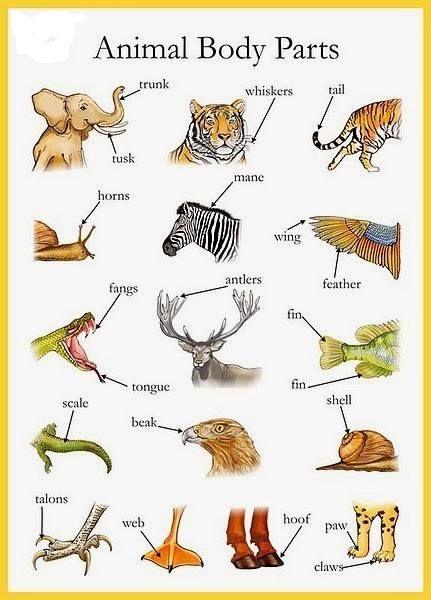 части тела животного на английском