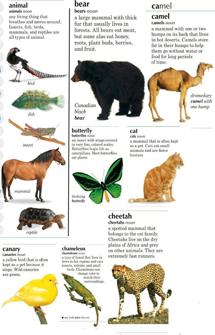 Описание животного по английскому для третьего класса