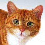 Учим короткие описания животных на английском с детьми / Short Descriptions of Animals for Young Students (A-C)