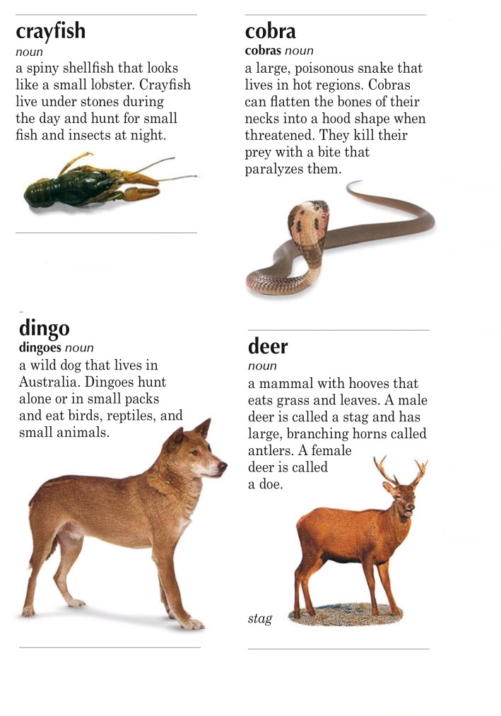 animals cd