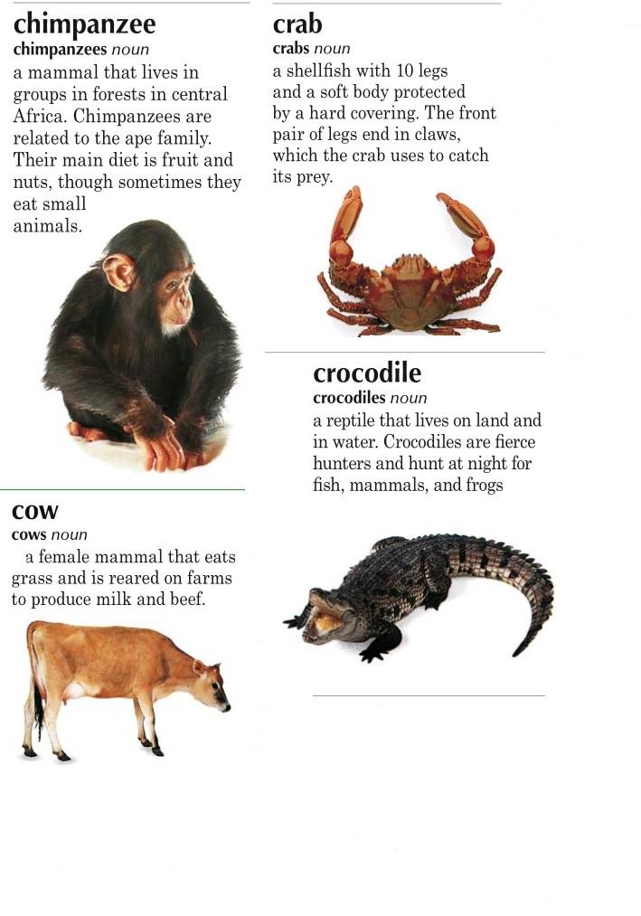 animals c