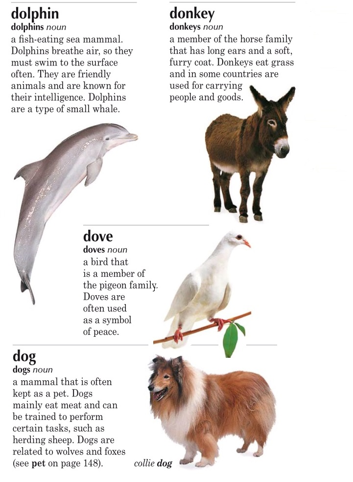 animals d
