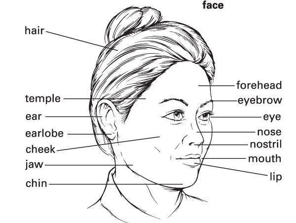 face лицо