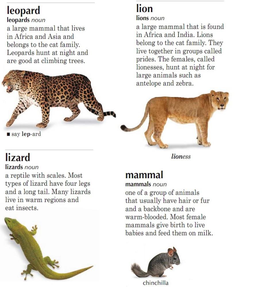 Расказ про животных на английском языке 4 класс