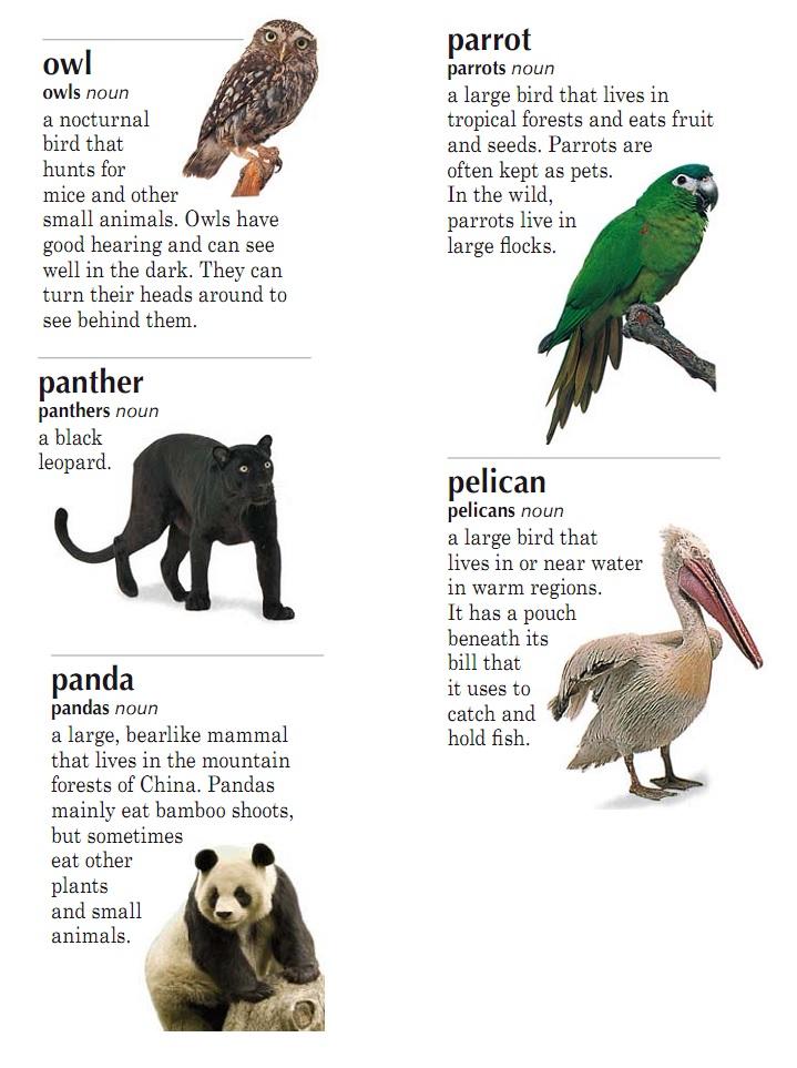 Английский 6 класс текст про животных