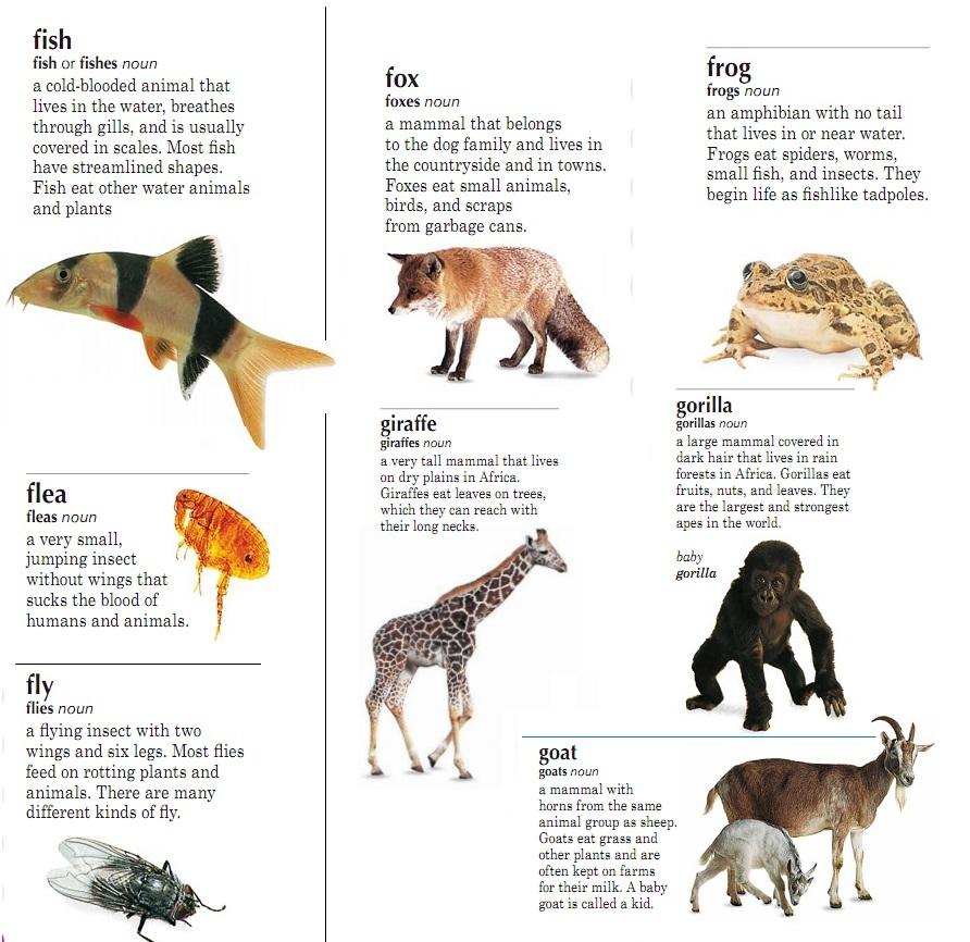 Эссе о животных на английском языке 6295