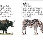 Мини-тексты о животных на английском: S-Z