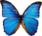 бабочка butterfly
