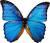 Названия насекомых на английском — INSECTS