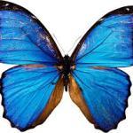 Названия насекомых на английском – INSECTS