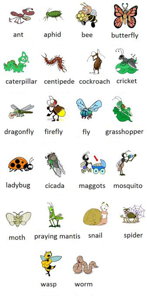 insects насекомые
