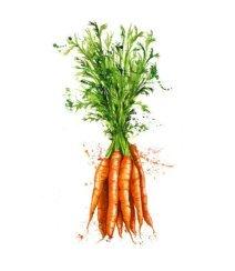 carrot - морковка