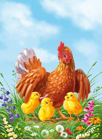 hen chicken