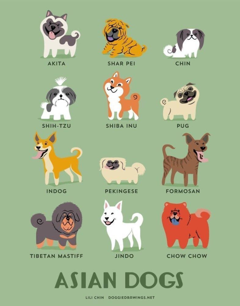 азиатские породы собак