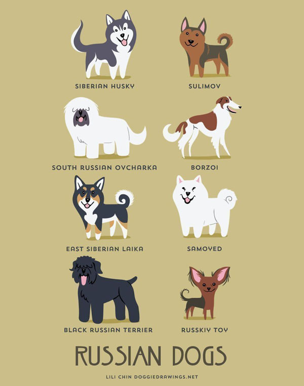 dogs6