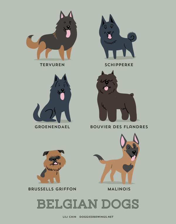 dogs4