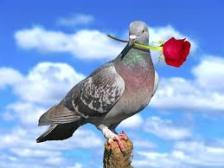 dove голубь